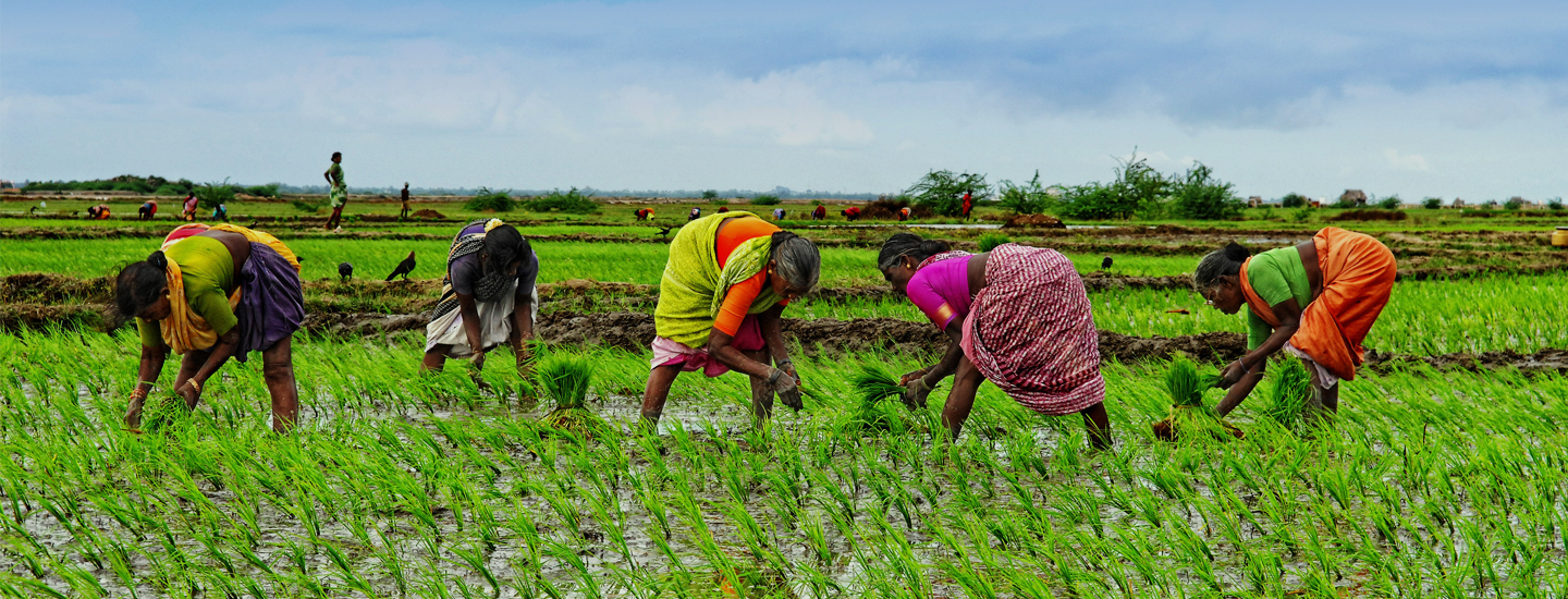 PROVIDING EASY LOANS TO THE FARMERS